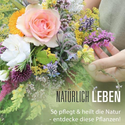 Inizio Kräuter und Pflanzen Lexikon